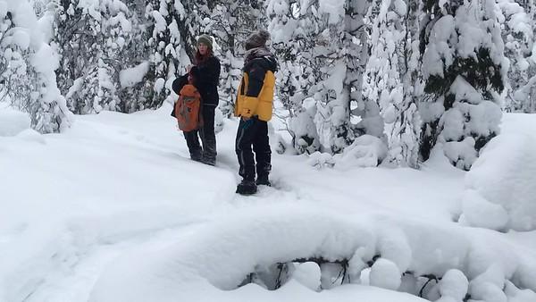 Walking in the Snowy Woods #5