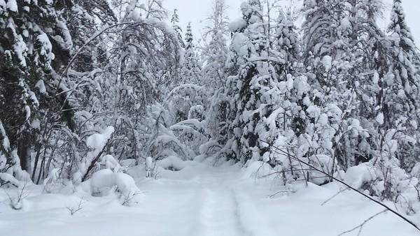 Walking in the Snowy Woods #4
