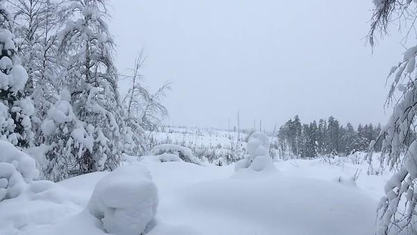 Walking in the Snowy Woods #2