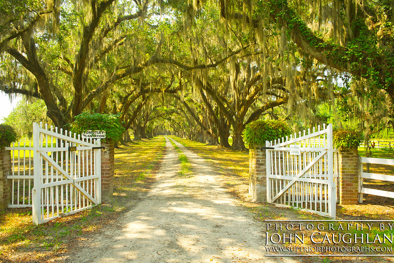 Here is another plantation somewhere on the back roads in South Carolina.