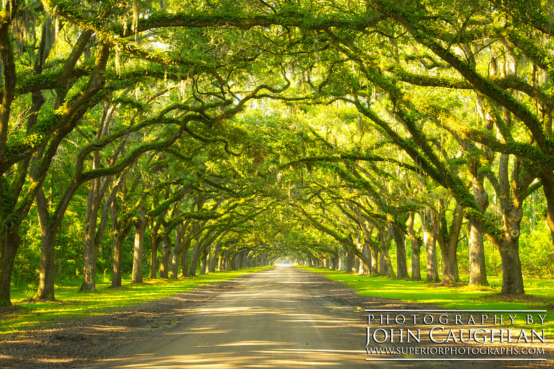 This is the Wormsloe plantation in Savannah, Georgia. Everything was so lush and green.