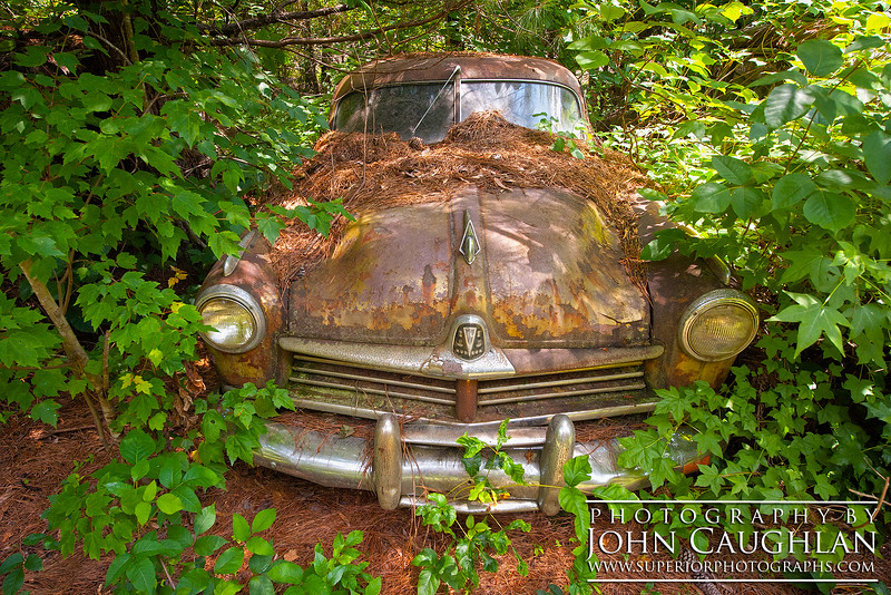 All the vehicles at Old Car City are slowly being re-claimed by nature.