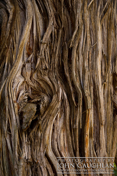 The bark on this 1,000-year-old cedar tree had so much character. This tree has survived fire, wind, and endless Minnesota winters.