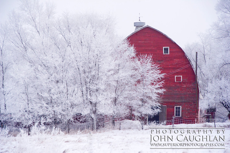 I love how this red barn is peeking from behind the frosty trees, like it was trying to hide from me.
