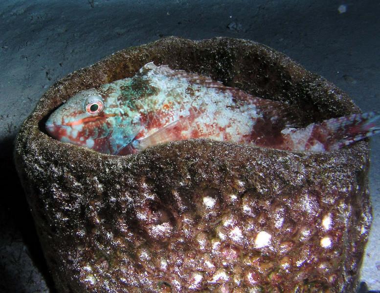 fishbed