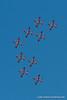 The Canadian Snowbirds. Fleet Week in San Francisco, CA. October 8, 2011.