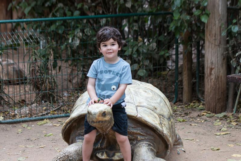 Ramat Gan Safari near Tel Aviv