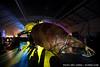 Giant backlit bug