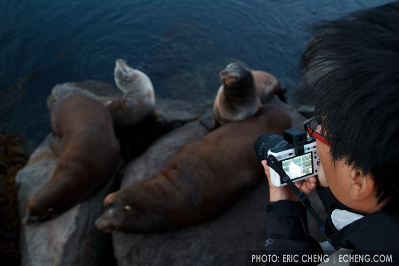 Aey Komson and California sea lions (Zalophus californianus) in Monterey