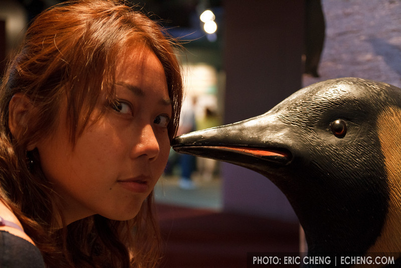 Mean vs pengiun, Monterey Bay Aquarium