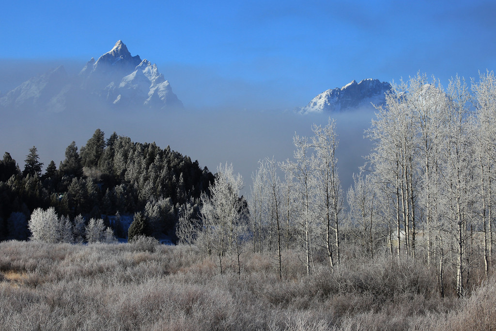 "TUESDAY, DECEMBER 1, 2009<br /> <br /> WYOMING 1086<br /> <br /> ""Winter fog in the Tetons""<br /> <br /> After a while I drove up to Oxbow Bend and the view of Mt. Moran, then I realized that the fog was being generated by Jackson Lake. Since the lake wasn't frozen, all the warm air rising off the water was meeting with the cold air left over from the night, making for lots and lots of fog.  Another benefit of the fog was that all the trees and shrubbery had become encased in frost. What a beautiful morning! And, a photographer's dream :-)<br /> <br /> Camera: Canon EOS 5D Mark II<br /> Lens: Canon EF 100-400mm<br /> Focal length: 135mm<br /> Shutter speed: 1/200<br /> Aperture: f/16<br /> ISO: 200"