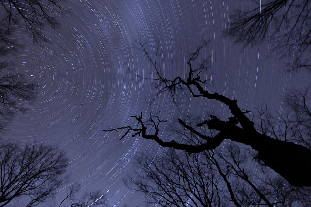 "SATURDAY, NOVEMBER 7, 2009<br /> <br /> STAR TRAILS 9500<br /> <br /> ""Star trails over the Ghost Maple""<br /> <br /> Third night... I got what I wanted. Crystal-clear skies and not a cloud in sight! So, I lined up my composition, dialed in my focus, and locked the shutter down for a one-hour exposure. I had great fun each night I was up there, and I guess the whole point of this is that even though you may not get what you are hoping for, don't get too discouraged because you may end up with some neat images that you weren't expecting!<br /> <br /> Camera: Canon EOS 5D Mark II<br /> Lens: Canon EF 17-40mm<br /> Focal length: 17mm<br /> Shutter speed: 53 minutes<br /> Aperture: f/4<br /> ISO: 100"