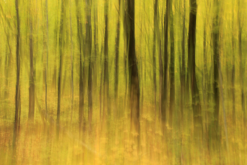 "SUNDAY, OCTOBER 25, 2009<br /> <br /> ABSTRACT 8544<br /> <br /> ""Maple forest abstract""<br /> <br /> Sometimes its fun to play around with shutter speeds and create some abstract images with an otherwise ""ordinary"" scene. This image is a 1/2 second exposure of a stand of Maple trees. I shot the image hand-held, without the use of a tripod and panned the camera vertically during the 1/2 second exposure.<br /> <br /> Camera: Canon EOS 5D Mark II<br /> Lens: Canon EF 17-40mm<br /> Focal length: 40mm<br /> Shutter speed: 0.5 sec<br /> Aperture: f/10<br /> ISO: 100"