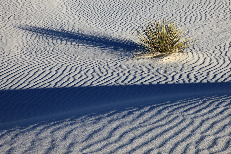 """FRIDAY, JANUARY 1, 2010<br /> <br /> NEW MEXICO 5032<br /> <br /> """"Dune Shadows""""<br /> <br /> Camera: Canon EOS 5D Mark II<br /> Lens: Canon EF 24-105mm<br /> Focal length: 105mm<br /> Shutter speed: 1/80<br /> Aperture: f/16<br /> ISO: 100"""