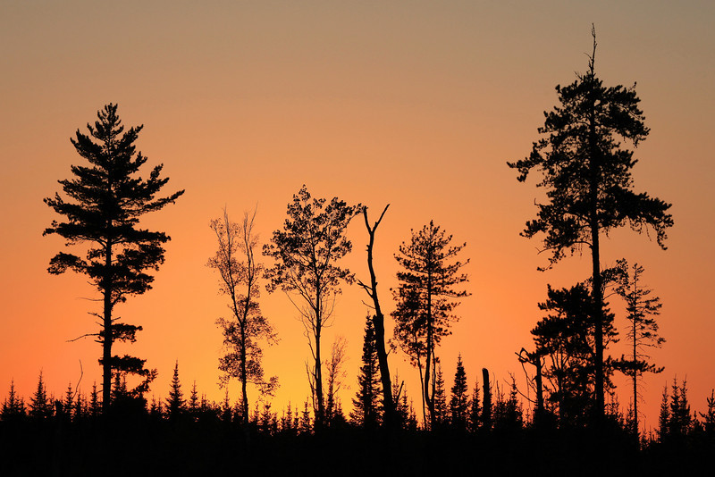 "SUNDAY, SEPTEMBER 5, 2010<br /> <br /> FOREST 0178<br /> <br /> ""Fire in the sky""<br /> <br /> While driving down an old logging road off the Arrowhead Trail one evening, I came across this opening that had a grouping of trees that stood out nicely against the sky. I was passing by right after the sun had gone down and the sky behind the trees was filled with this beautiful orange glow. <br /> <br /> Camera: Canon EOS 5D Mark II<br /> Lens: Canon EF 100-400mm<br /> Focal length: 200mm<br /> Shutter speed: 1/640<br /> Aperture: f/10<br /> ISO: 400"