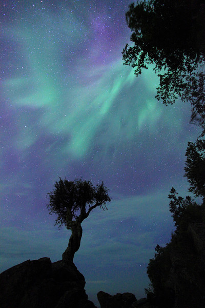 "SATURDAY, AUGUST 6, 2011<br /> <br /> AURORA 1387<br /> <br /> ""Dancing Sky over the Spirit Tree""<br /> <br /> Here is a view that shows just how strong this geomagnetic storm was. This vantage point of the Spirit Tree is actually looking East/Southeast. Most of the time when shooting the Northern lights at the tree I have to shoot the other profile of it, which is looking to the North. I've always wanted to get a nice strong aurora so I could photograph them behind the tree from this other angle, which is a more Southeasterly direction. Well, on August 6th, 2011 I got my wish!<br /> <br /> Camera: Canon EOS 5D Mark II<br /> Lens: Canon EF 17-40mm<br /> Focal length: 17mm<br /> Shutter speed: 30 seconds<br /> Aperture: f/4<br /> ISO: 2500"