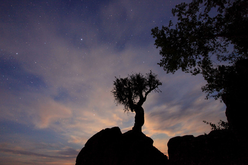 "SATURDAY, JUNE 25, 2011<br /> <br /> SPIRIT TREE 0937<br /> <br /> ""Moon Glow""<br /> <br /> Taken during June's full moon, this is a 30 second exposure where the moon was behind the rock just below the tree.<br /> <br /> Camera: Canon EOS 5D Mark II<br /> Lens: Canon EF 17-40mm<br /> Focal length: 17mm<br /> Shutter speed: 30 seconds<br /> Aperture: f/4<br /> ISO: 1600"