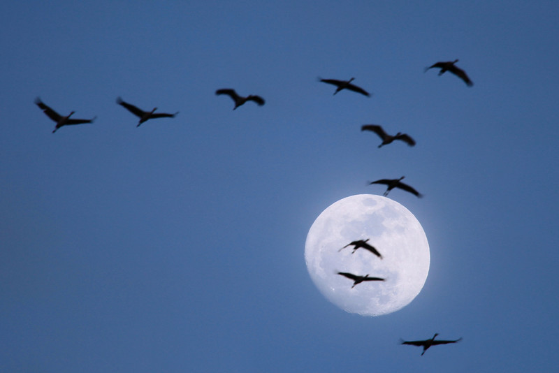 "FRIDAY, MARCH 18, 2011<br /> <br /> NEBRASKA 6354<br /> <br /> ""Sandhill Cranes and March Moon""<br /> <br /> Camera: Canon EOS 5D Mark II<br /> Lens: Canon EF 100-400mm<br /> Focal length: 400mm<br /> Shutter speed: 1/200<br /> Aperture: f/5.6<br /> ISO: 400"