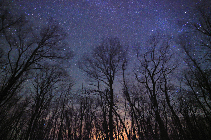 "WEDNESDAY, NOVEMBER 30, 2011<br /> <br /> MILKY WAY 6077<br /> <br /> ""Starry Night in the Maple Forest""<br /> <br /> This photo was made last night when there was supposed to be a pretty good chance of seeing some Northern Lights. While the Aurora was a no-show, the stars last night were incredibly vivid, so much so that it felt like you could reach up and pluck them from the sky.<br /> <br /> The magic of the night reminded me of my favorite quote from Vincent van Gogh:<br /> <br /> ""For my part I know nothing with any certainty, but the sight of the stars makes me dream.""<br /> <br /> Camera: Canon EOS 5D Mark II<br /> Lens: Canon EF 17-40mm<br /> Focal length: 17mm<br /> Shutter speed: 30 seconds<br /> Aperture: f/4<br /> ISO: 6400"
