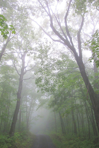 "THURSDAY, SEPTEMBER 1, 2011<br /> <br /> FOREST 9936<br /> <br /> ""Foggy Maples""<br /> <br /> A foggy afternoon in the forest on the last day of August 2011. This was taken with my 'point-and-shoot' camera, a Canon G11.<br /> <br /> Camera: Canon PowerShot G11<br /> Focal length: 6.1mm<br /> Shutter speed: 1/60<br /> Aperture: f/2.8<br /> ISO: 400"
