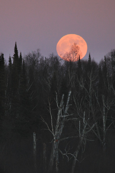 "SUNDAY, JANUARY 8, 2012<br /> <br /> MOONLIGHT 4555<br /> <br /> ""Birch Tree Moonrise""<br /> <br /> Taken yesterday at Grand Portage State Park in Northeast Minnesota. As I was leaving work I spotted the moon rising across the Pigeon River and it was BEAUTIFUL so of course I had to get the camera out and make some photos!<br /> <br /> Camera: Canon EOS 5D Mark II<br /> Lens: Canon EF 100-400mm<br /> Focal length: 400mm<br /> Shutter speed: 1/400<br /> Aperture: f/7.1<br /> ISO: 1000"
