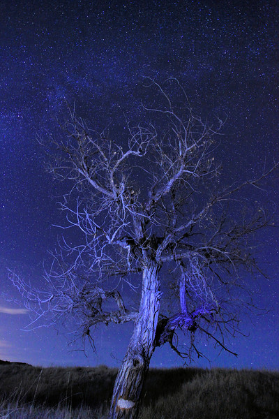 "SATURDAY, NOVEMBER 3, 2012<br /> <br /> SOUTH DAKOTA 9848<br /> <br /> ""South Dakota Spirit Tree""<br /> <br /> I haven't been doing much shooting lately (too many other things going on), so I've been digging through my archives looking for photos that I've always wanted to put on my website but (until now) didn't have the time to do. This one is from my 6-week trip through the west that I did back in 2009. My friend Roger Nordstrom  <a href=""http://www.rogernordstromphoto.com/"">http://www.rogernordstromphoto.com/</a>) and I spent several days in the Badlands and Black Hills of South Dakota photographing the night sky, among other things. As we drove around during the day we were constantly on the lookout for trees to photograph against the night sky. This particular tree was one that we both greatly enjoyed photographing. Roger was ""painting light"" onto the tree using the lowest setting on his headlamp while I recorded this image. <br /> <br /> Camera: Canon EOS 5D Mark II<br /> Lens: Canon EF 17-40mm<br /> Focal length: 17mm<br /> Shutter speed: 30 seconds<br /> Aperture: f/4<br /> ISO: 1600"