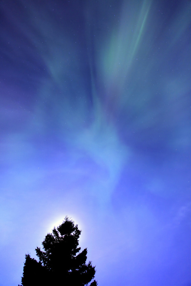 """MONDAY, OCTOBER 1, 2012<br /> <br /> AURORA 7666<br /> <br /> """"Spruce Tree Moon and September Aurora""""<br /> <br /> Last night's display of the Aurora Borealis was mostly overpowered by the light of the full moon, but for a brief period around 11 PM the lights exploded and were easily visible over the light of the moon. This photo was made right in my yard over the top of a spruce tree next to my house. I composed the photo so the moon was behind the top of the tree. I can only imagine how much more powerful these lights would have appeared if this had been a moonless night. Even so, I do very much like this photo and I think the moonlight adds some nice additional atmosphere to the overall feel of the image.<br /> <br /> Camera: Canon EOS 5D Mark II<br /> Lens: Canon EF 17-40mm<br /> Focal length: 17mm<br /> Shutter speed: 20 seconds<br /> Aperture: f/4<br /> ISO: 400"""