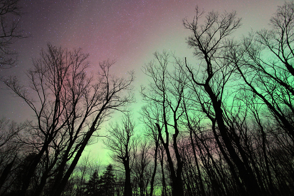 """MONDAY, SEPTEMBER 24, 2012<br /> <br /> AURORA 7678<br /> <br /> """"Maple Aurora""""<br /> <br /> I have been suffering from Aurora withdrawals again lately, since our last good showing of Northern Lights was over 2 months ago. What can I say? The last year and a half of good solar activity has me spoiled and I want more :-) This one was taken on October 25, 2011 along one of the Maple ridges in Grand Portage, MN. It is a favorite spot of mine to photograph the fall colors, but is also a wonderful spot to photograph the trees silhouetted against the night sky once the leaves have fallen.<br /> <br /> Camera: Canon EOS 5D Mark II<br /> Lens: Canon EF 17-40mm<br /> Focal length: 17mm<br /> Shutter speed: 30 seconds<br /> Aperture: f/4<br /> ISO: 2000"""