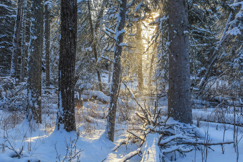 """SATURDAY, FEBRUARY 9, 2013<br /> <br /> FOREST 0469<br /> <br /> """"Magic Light in the Snowy Forest""""<br /> <br /> Earlier this week after photographing an AMAZING sunrise at Horseshoe Bay on Lake Superior I was walking back to the car when I came across this scene.  About 4 inches of light, fluffy snow had fallen the previous night and every now and then a wind gust would kick up and blow snow from the trees.  When I saw the sunlight shining through this part of the forest I instantly knew the shot I wanted to get. I set up my tripod and waited for another gust of wind.  I didn't have to wait long.  About two minutes after I was set up the wind came up and blew a bunch of snow from the trees down into the light.  It was a magical scene and I'm glad I was there to photograph it! <br /> <br /> Camera: Canon EOS 5D Mark II<br /> Lens: Canon EF 17-40mm<br /> Focal length: 40mm<br /> Shutter speed: 1/30<br /> Aperture: f/16<br /> ISO: 200"""