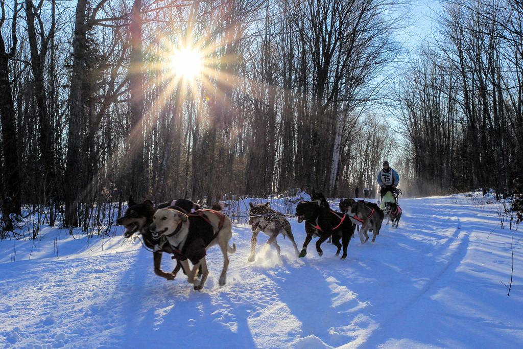 "SUNDAY, JANUARY 6, 2013<br /> <br /> SLED DOGS 9056<br /> <br /> ""Finding their groove""<br /> <br /> A dog team finds its rhythm after blasting out of the starting gate at the first-ever Gichigami Express Sled Dog Race in Grand Portage, MN.<br /> <br /> This is my favorite shot from this morning.  I got plenty of cool shots of the dogs lunging forward at the starting line, but this one I think tells more of a story.  The starting line is chaos; with dogs barking, mushers and handlers scrambling to keep things in order, and spectators everywhere.  A couple hundred yards down the trail the chaos of the starting line is nowhere to be found.  All you hear is the rhythm of the dogs breathing and the sound of the sled as it glides by on the surface of the snow.  It is a wonderful thing to witness! <br /> <br /> Camera: Canon EOS 5D Mark II<br /> Lens: Canon EF 17-40mm<br /> Focal length: 40mm<br /> Shutter speed: 1/320<br /> Aperture: f/22<br /> ISO: 1000"