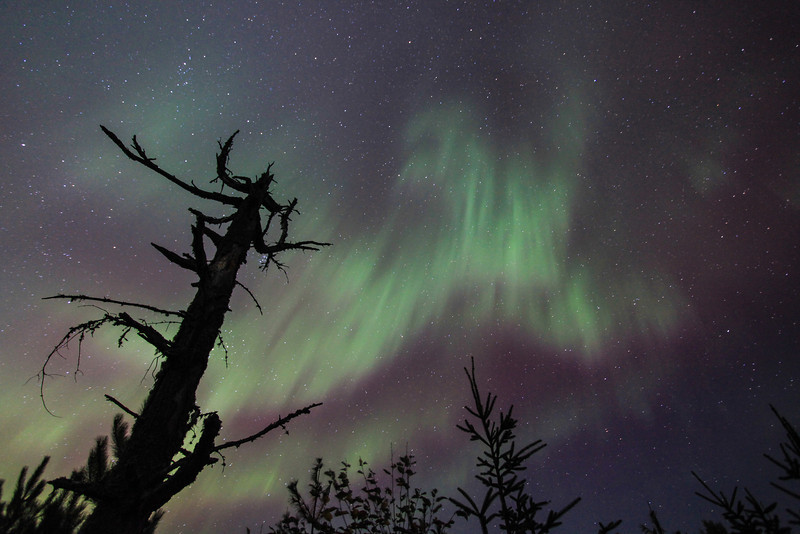 """THURSDAY, NOVEMBER 21, 2013<br /> <br /> AURORA 1758<br /> <br /> """"The Conductor - Aurora Symphony""""<br /> <br /> Here is another night-time image of the tree that I have unofficially named """"The Conductor"""".  This photo was actually made BEFORE the last image that I posted of The Conductor.  It was taken in early October of this year during a spectacular night of northern lights.  While this is far from my favorite image of that night, it is nonetheless one that I like enough to share with all of you! <br /> <br /> Camera: Canon EOS 5D Mark II<br /> Lens: Canon EF 17-40mm<br /> Focal length: 40mm<br /> Shutter speed: 30 seconds<br /> Aperture: f/4<br /> ISO: 1600"""
