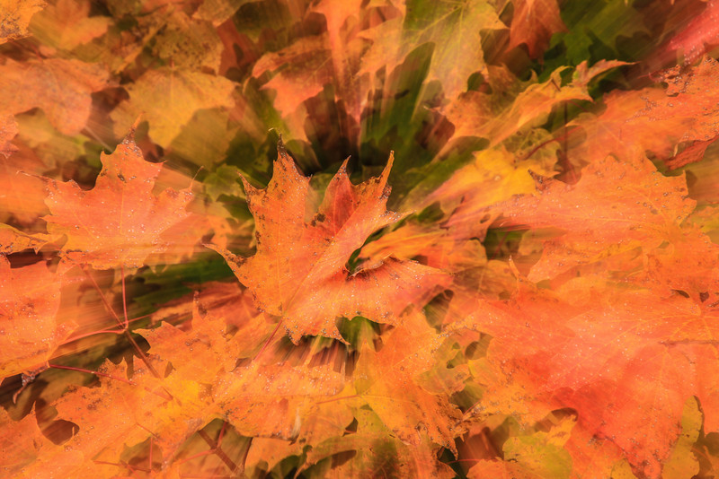 "SATURDAY, OCTOBER 5, 2013<br /> <br /> ABSTRACT 0536<br /> <br /> ""Maple Zoom""<br /> <br /> One more abstract image showing a slow shutter speed combined with zooming the camera lens while recording the exposure.  I have experimented with this in the past, but hadn't done any shots like this in quite a while.  Then I noticed my friend Shawn Thompson  <a href=""http://shawnthompsonphotography.com"">http://shawnthompsonphotography.com</a>) post this type of shot on his facebook page, which inspired me to go out and try it again.  I found a nice patch of red leaves to experiment with and after several attempts I finally got an image that I like.<br /> <br /> Camera: Canon EOS 5D Mark II<br /> Lens: Canon EF 24-105mm<br /> Focal length: 24mm to 105mm<br /> Shutter speed: 1 second<br /> Aperture: f/22<br /> ISO: 50"