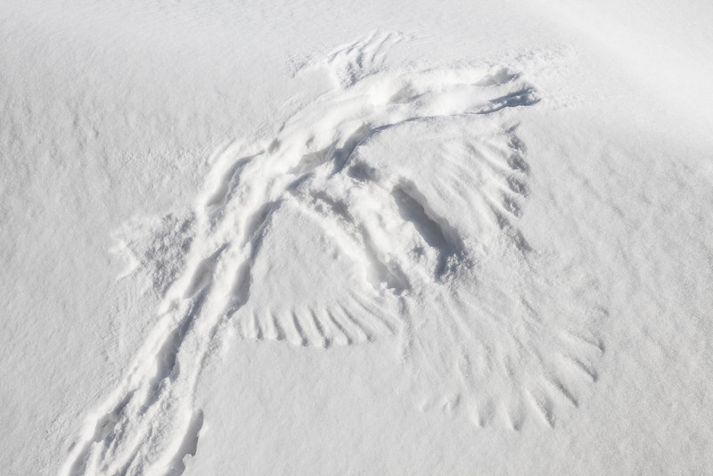"THURSDAY, APRIL 3, 2014<br /> <br /> ABSTRACT 2647<br /> <br /> ""Stories in Snow""<br /> <br /> Here is a find that I made recently while snowshoeing the ice along the Lake Superior shoreline in Grand Portage.  I found this imprint in the snow at the base of a small cliff.  Apparently this bird found himself a nice meal and the drama of that capture was preserved in the surface of the snow.  I've seen photos before of bird imprints like this left in the snow, but never actually seen one in real life.  It was quite an exciting find!  Definitely one of the highlights of my photo outings this winter.  <br /> <br /> Camera: Canon EOS 5D Mark II<br /> Lens: Canon EF 17-40mm<br /> Focal length: 40mm<br /> Shutter speed: 1/400<br /> Aperture: f/16<br /> ISO: 400"