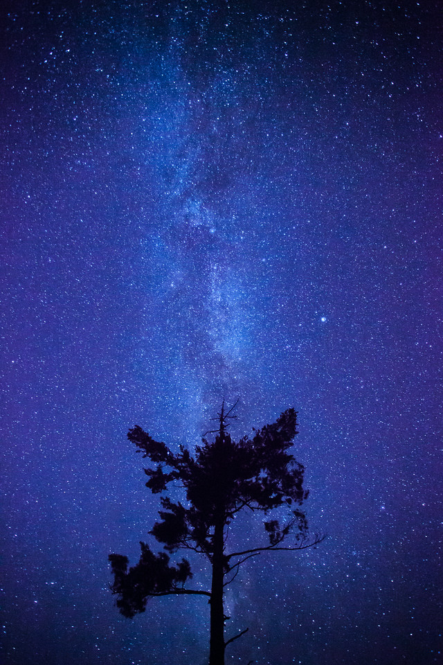 "FRIDAY, AUGUST 8, 2014<br /> <br /> MILKY WAY 8895<br /> <br /> ""Solitary Pine and the Milky Way""<br /> <br /> Well, I hope you're not getting tired of Milky Way images as it seems that is all I've been shooting lately!  Last weekend I found a new place that I really enjoy for photographing the night sky.  It's in the middle of an area that was logged over the past couple of winters and there are these big, beautiful pine trees that were left out in the open as seed trees.  It sure makes for a cool place to photograph these old growth trees silhouetted against the night sky.  For this image I decided to compose just one of the trees in my shot with the Milky Way rising directly behind the tree.<br /> <br /> Camera: Canon EOS 5D Mark II<br /> Lens: Canon EF 17-40mm<br /> Focal length: 17mm<br /> Shutter speed: 30 seconds<br /> Aperture: f/4<br /> ISO: 6400"
