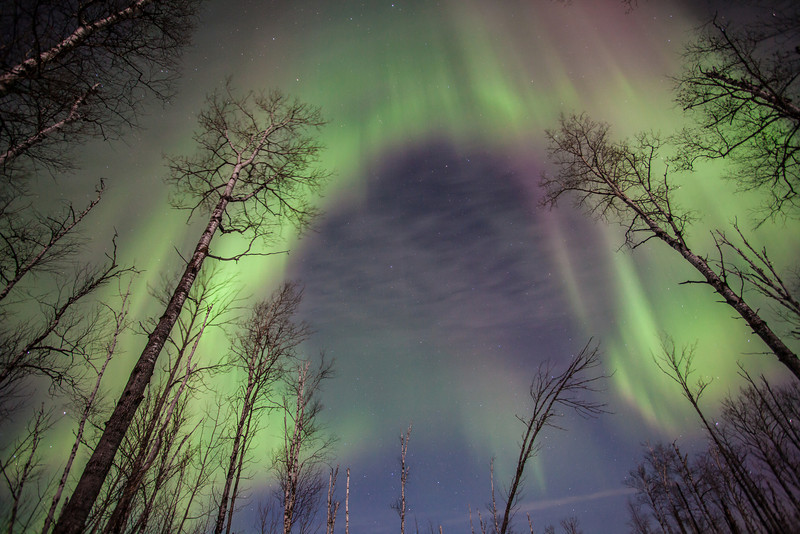 """MONDAY, FEBRUARY 24, 2014<br /> <br /> AURORA 1589<br /> <br /> """"Horseshoe Aurora""""<br /> <br /> I was getting pretty tired around 2:00 AM on the morning of February 19, 2014 and the northern lights that I had been photographing for the past two hours were starting to fade.  I figured it was a good time to pack up and head home.  I had already made a lot of really nice images in the past two hours.  I was driving back out along the logging road when I decided to stop and check once again the first place that I had photographed that night.  Something compelled me to stop. I guess I just wanted to see if the lights looked any better than they did earlier.  Or, maybe the sky was telling me that it wasn't yet done with me for the night.  <br /> <br /> At any rate, I stopped, got out of the truck and walked back down the road a few yards and looked up at the first group of trees that I had photographed that night.  The lights were barely there, but as I stood and watched they once again began to increase in their intensity.  Moments later I was looking at an incredible display that overshadowed everything I had seen in the two previous hours.  I quickly grabbed my gear and set up for some more shooting.  Once I had everything ready I started taking picture after picture as this fascinating horseshoe-shaped aurora marched across the sky above me.  As soon as the shape crossed my camera's field of view, the lights diminished somewhat and the horseshoe shape was gone.  The lights continued dancing but at a less intense rate.  I don't know what compelled me to stop, but I sure am glad that I did because if I hadn't I wouldn't be able to share this image with you today.<br /> <br /> Camera: Canon EOS 5D Mark II<br /> Lens: Canon EF 17-40mm<br /> Focal length: 17mm<br /> Shutter speed: 15 seconds<br /> Aperture: f/4<br /> ISO: 1000"""