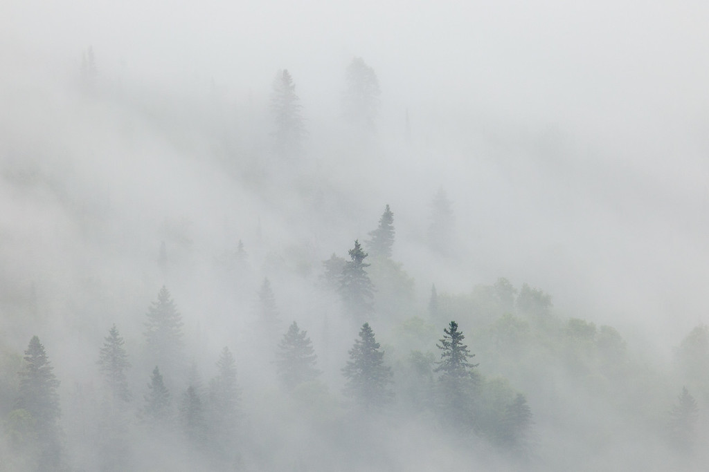 "FRIDAY, JULY 11, 2014<br /> <br /> FOREST 8215<br /> <br /> ""Foggy Hillside - Mt. Josephine""<br /> <br /> Boy, everyone sure seems to be complaining a lot about the weather this year!  Personally, I am loving the weather we've been having.  Changing weather and stormy weather makes for more interesting photos!  Sure, our gardens would like it if things were a little warmer and sunnier.  After all, sunlight brings life.  But then, so does the rain!  At any rate, in ""honor"" of this morning's rainy/foggy weather, here is a recent shot of the hillside of Mt. Josephine in dense fog.  I just love fog and the mood it creates for photos.  It sure is fun to take photos of the forest bathed in a thick blanket of fog!<br /> <br /> Camera: Canon EOS 5D Mark II<br /> Lens: Tamron SP 150-600mm<br /> Focal length: 600mm<br /> Shutter speed: 1/40<br /> Aperture: f/16<br /> ISO: 400"