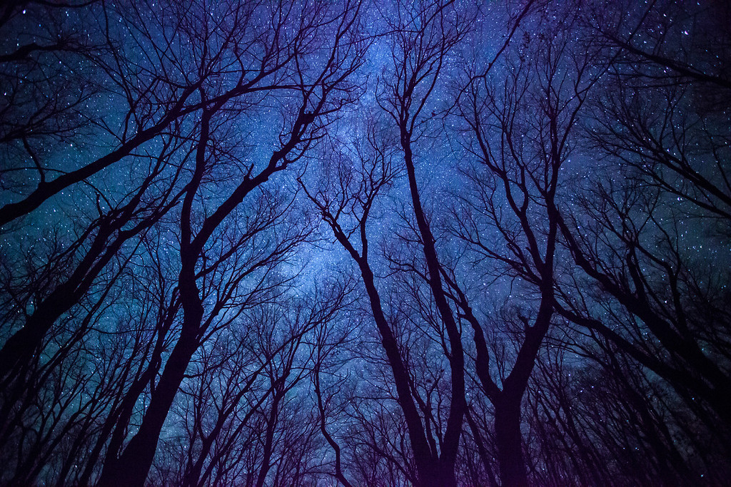 """FRIDAY, OCTOBER 17, 2014<br /> <br /> MILKY WAY 0230<br /> <br /> """"Maple Galaxy""""<br /> <br /> Every year in October something amazing happens... the trees lose their leaves!  Every year this happens, and every year people lament the loss of the leaves.  I too am sad to see them go, but a part of me also looks forward to it.  For one thing, it means that winter will soon be here with all of its wonders, not the least of which is ice, one of my favorite photographic subjects!  It also means that the opportunities for photographing the night sky beneath the tree canopy are now plentiful.  With no leaves to block the view of the stars, the world beneath the trees becomes an incredible environment now bathed in starlight.  I especially love the look of maple trees against the night sky.  Their trunks almost always have an intriguing shape and make for wonderful silhouettes against the backdrop of the Milky Way Galaxy.  So, get out there and enjoy the new views of the night sky!<br /> <br /> Camera: Canon EOS 5D Mark II<br /> Lens: Canon EF 17-40mm<br /> Focal length: 17mm<br /> Shutter speed: 30 seconds<br /> Aperture: f/4<br /> ISO: 6400"""