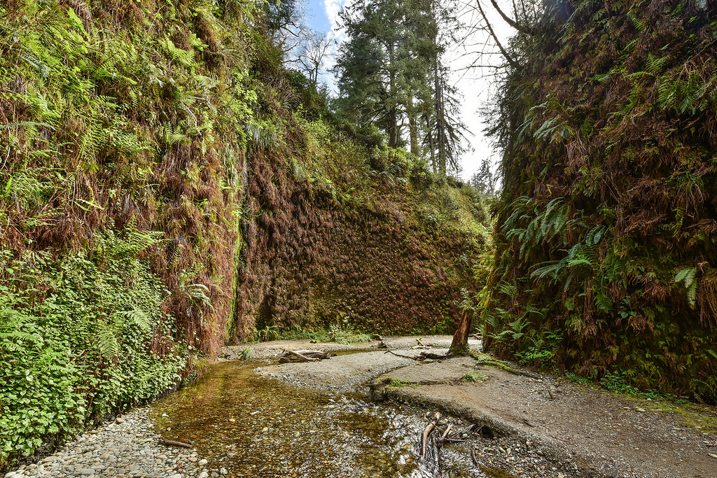 "WEDNESDAY, APRIL 1, 2015<br /> <br /> CALIFORNIA 2576<br /> <br /> ""Fern Canyon""<br /> <br /> After our visit to Burney Falls we spent the night in Redding then continued on to the Arcata/Eureka area where we were going to be spending a couple days with some of Jessica's friends.  While we were there we went on a group hike to Fern Canyon in Prairie Creek Redwoods State Park.  If you've never been to Fern Canyon, it is a fascinating place and I would highly recommend it.  It's an easy, flat hike but does require that you get your feet wet as you have to walk in the water to make it up the canyon.  The water is really shallow, though, so it's not difficult.  The effort is worth it as the views from within the canyon make you feel like you're in a fantasy world.  Ferns are everywhere on the canyon walls (hence the name).  We spent almost a couple of hours in the canyon but the time flew by.  It sure is an interesting place to make some photographs!<br /> <br /> Camera: Nikon D750<br /> Lens: Nikon 14-24mm f/2.8<br /> Focal length: 14mm<br /> Shutter speed: 1/100<br /> Aperture: f/16<br /> ISO: 800"