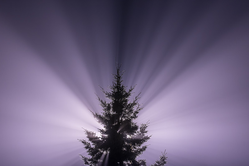 """SUNDAY, AUGUST 30, 2015<br /> <br /> ABSTRACT 9175<br /> <br /> """"The Tree of Light""""<br /> <br /> While watching the lightning storms over the Grand Marais harbor the other night, there were several quiet periods in between the storm fronts.  During one of these quiet periods a fog bank rolled in over the harbor and made all kinds of unique things happen with the lights around the area.  At one point I was walking around to stretch my legs a bit and looking away from the lake over the campground area when I saw this spruce tree with a street light directly behind it.  The way the light was spreading out from behind the tree and into the fog was mesmerizing.<br /> <br /> Camera: Nikon D750<br /> Lens: Tamron SP 150-600mm<br /> Focal length: 150mm<br /> Shutter speed: 13 seconds<br /> Aperture: f/16<br /> ISO: 400"""