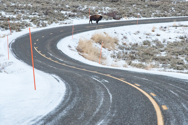 """THURSDAY, DECEMBER 10, 2015<br /> <br /> WYOMING 4843<br /> <br /> """"Bison Curves""""<br /> <br /> A lone bison and a curvaceous section of road in the Lamar Valley of Yellowstone National Park.<br /> <br /> Camera: Nikon D750<br /> Lens: Nikon 300mm f/4 PF<br /> Focal length: 300mm<br /> Shutter speed: 1/320<br /> Aperture: f/11<br /> ISO: 1600"""