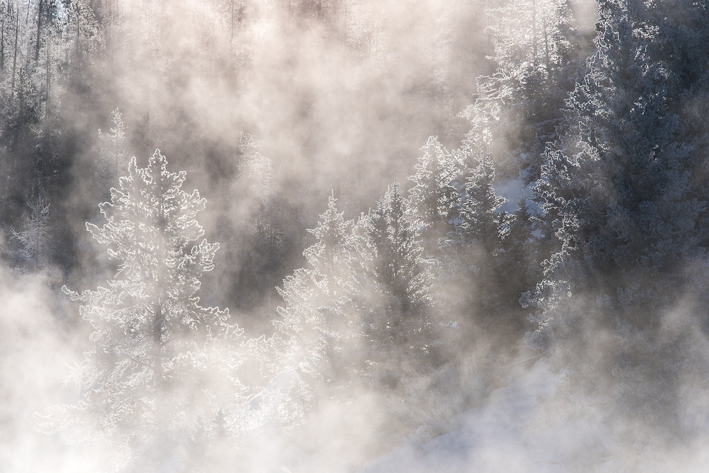 "THURSDAY, DECEMBER 3, 2015<br /> <br /> MONTANA 4742<br /> <br /> ""Frosty Forest on the Gallatin River""<br /> <br /> Another image from our foggy/frosty/frigid morning drive from West Yellowstone to Bozeman, Montana.  This one was made with a Nikon 300mm f/4 PF lens.  I was trying out this lens for the first time on our Yellowstone trip and I loved it.  It was a joy to shoot with!  All of the wildlife images I've posted so far from the trip were also made with the Nikon 300 PF.<br /> <br /> Camera: Nikon D750<br /> Lens: Nikon 300mm f/4 PF and Nikon 1.4x III teleconverter<br /> Focal length: 420mm<br /> Shutter speed: 1/640<br /> Aperture: f/16<br /> ISO: 400"