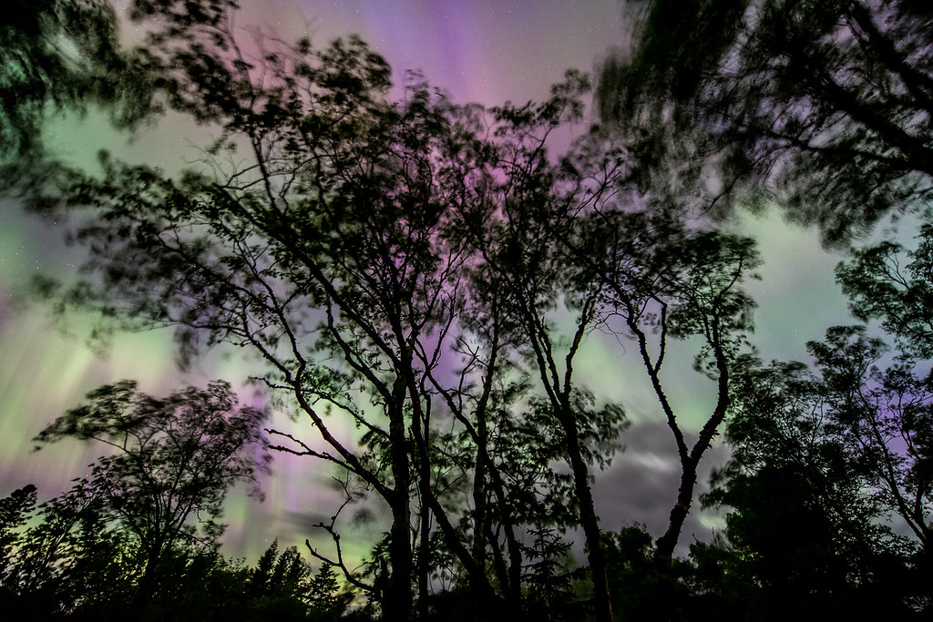 """FRIDAY, JUNE 26, 2015<br /> <br /> AURORA 6402<br /> <br /> """"The Solar Wind""""<br /> <br /> Here is one more image from the night of the big solar storm on June 23, 2015.  After photographing the amazing display of lights over Hollow Rock on Lake Superior, I decided to try composing some photos with trees in the foreground.  So, I walked back up the beach away from the lake and looked for a nice set of trees to photograph against the sky.  It didn't take long to find a composition that I liked!  This was a group of trees in between two of the cabins at Hollow Rock Resort.  It was also a windy night, as you can tell from the movement of the trees in this photo.  Since the northern lights are often caused by the solar wind I thought that might make a nice title for this image.  <br /> <br /> Camera: Nikon D750<br /> Lens: Nikon 14-24mm f/2.8<br /> Focal length: 14mm<br /> Shutter speed: 10 seconds<br /> Aperture: f/2.8<br /> ISO: 1600"""