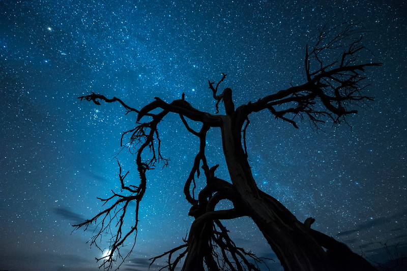 "SATURDAY, MARCH 28, 2015<br /> <br /> CALIFORNIA 1700<br /> <br /> ""Warrior Tree""<br /> <br /> I thought I knew what a good dark sky was, but I had no idea just how good it could be until I went to Death Valley.  We stayed out at the Mesquite Flat Dunes past sunset to watch the sky turn dark and fill with stars.  We had no idea just how many stars we would see!  We have some pretty dark skies in northeast Minnesota, but Death Valley's night sky blows ours away.  The stars were so bright we could actually see enough to walk around without the aid of a headlamp.  We found this cool mesquite tree right near the trailhead for the dunes.  It was the perfect foreground for photographing some stars.  We spent at least an hour at the base of this tree photographing it and enjoying the beautiful sky above.  I sure wish we would have had more than one night to spend in Death Valley.  I can't wait to go back and photograph more of the night sky in this amazing park!<br /> <br /> Camera: Nikon D750<br /> Lens: Nikon 14-24mm f/2.8<br /> Focal length: 14mm<br /> Shutter speed: 25 seconds<br /> Aperture: f/2.8<br /> ISO: 3200"