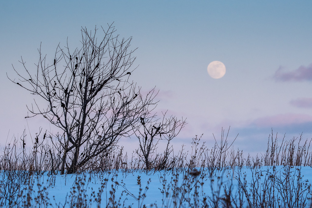 "WEDNESDAY, MARCH 4, 2015<br /> <br /> MOONLIGHT 0847<br /> <br /> ""Moonrise Magic""<br /> <br /> I just got in from another full day spent outside in search of photos. I started with sunrise at Hollow Rock in Grand Portage and ended with the rising moon just north of Grand Marais.  It was another amazing day of photography!  The sunrise over Hollow Rock was beautiful, I saw lots of cool ice formations throughout the day and the sunset was gorgeous.  I even had the pleasure of watching some eagles and ravens for about an hour as they fed on a dead deer on the side of the highway.  The moonrise image you see here was the perfect end to a perfect day!<br /> <br /> Camera: Nikon D750<br /> Lens: Tamron SP 150-600mm<br /> Focal length: 210mm<br /> Shutter speed: 1/250<br /> Aperture: f/16<br /> ISO: 1000"