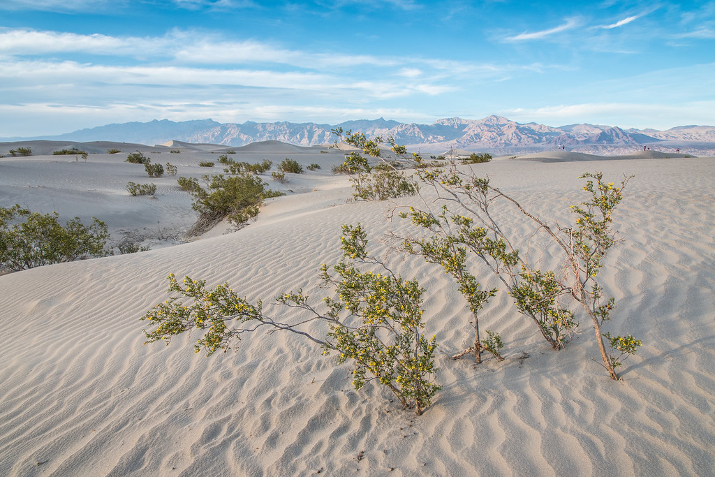 "THURSDAY, MARCH 26, 2015<br /> <br /> CALIFORNIA 1636<br /> <br /> ""Evening at the dunes""<br /> <br /> After photographing the Mesquite Flat Dunes from the side of the highway a few miles away, we continued on to the dunes themselves to explore and photograph them at sunset.  When we arrived at the dunes the wind was blowing quite strongly and was whipping sand everywhere.  We were wearing shorts and the blowing sand stung as it hit our legs.  Still, it was a very beautiful evening and we really enjoyed our time at the dunes.  Another inconvenience is that there were people everywhere, making it hard to find a composition without any people in the background.  As such, there are some people in the distance in this photo, but they do help lend a sense of scale to the scene.<br /> <br /> Camera: Nikon D750<br /> Lens: Nikon 24-120mm f/4<br /> Focal length: 24mm<br /> Shutter speed: 1/80<br /> Aperture: f/11<br /> ISO: 400"