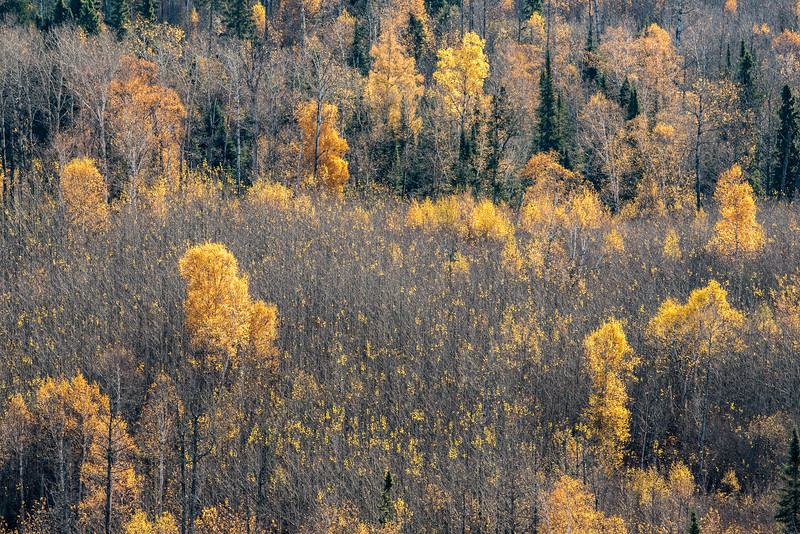 """FRIDAY, OCTOBER 16, 2015<br /> <br /> AUTUMN 3152<br /> <br /> """"Dwindling Color""""<br /> <br /> The fall color season is drawing to a close.  We still have some nice colorful trees but the majority have now lost most of their leaves.  Still, the color that remains is worth enjoying and in a way is just as beautiful as the peak color.  Personally, I like the landscape when it's dotted with color such as this.  It looks like we're in for a nice, sunny weekend (although it will be a little chilly with highs forecast to be in the low 40's).  So, dress warmly and get out to enjoy the last of the fall colors!<br /> <br /> Camera: Nikon D750<br /> Lens: Tamron SP 150-600mm<br /> Focal length: 360mm<br /> Shutter speed: 1/500<br /> Aperture: f/16<br /> ISO: 1000"""