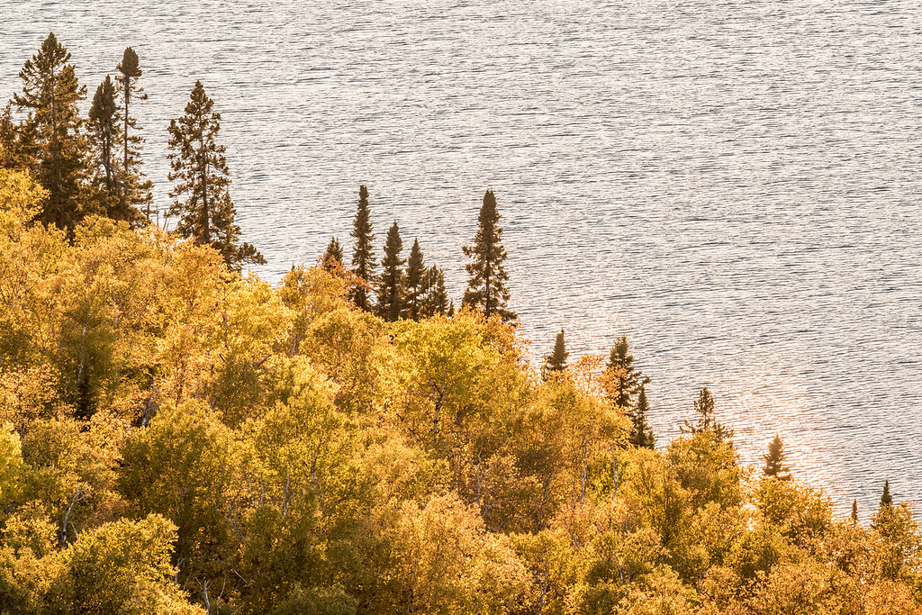 "SATURDAY, OCTOBER 3, 2015<br /> <br /> AUTUMN 2711<br /> <br /> ""October Colors on Speckled Trout Lake""<br /> <br /> <br /> I've heard a lot of people complaining that the fall colors aren't very good this year (not to mention the color change is a bit later than usual).  I have also noticed that the colors in general don't seem to have the vibrance that they've had in past years.  Still, there is a lot of beauty to be found out there.  Last night I made a quick trip up to a local fire tower, probably my favorite fall color view anywhere in Minnesota.  <br /> <br /> While the wide-angle view from the fire tower is certainly lacking compared to the best color years, when I used my telephoto lens to zoom in on the landscape below I found plenty of beautiful areas.  There was some light cloud cover but the sun was shining through the clouds and lightly shimmering on the surface of the lake, which is the weird sort of different color/light that you see on the water near the lower right of the photo.  I liked the diagonal split of the scene between the tree line and the water behind it.<br /> <br /> Camera: Nikon D750<br /> Lens: Tamron SP 150-600mm<br /> Focal length: 300mm<br /> Shutter speed: 1/125<br /> Aperture: f/16<br /> ISO: 800"