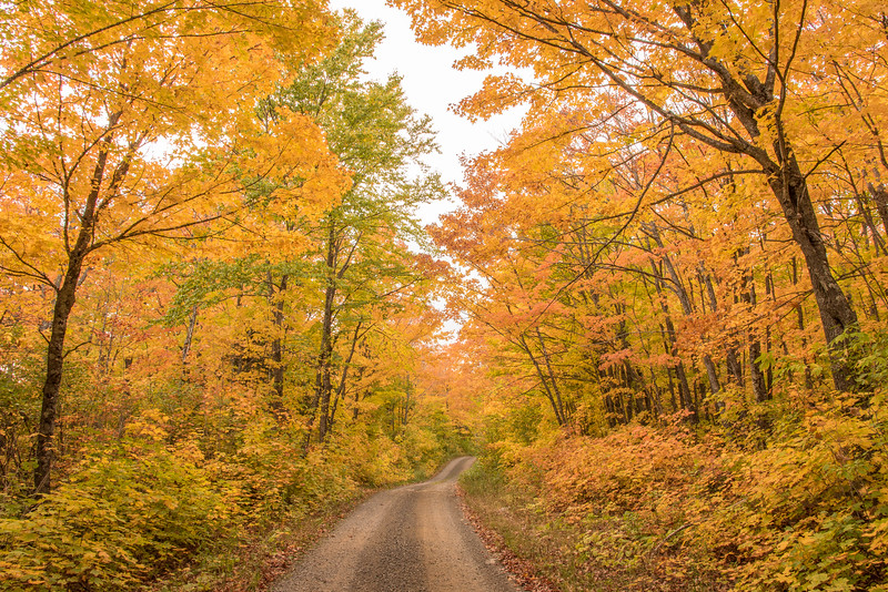 """MONDAY, OCTOBER 5, 2015<br /> <br /> AUTUMN 2716<br /> <br /> """"Minnesota Maples""""<br /> <br /> The fall colors are pretty glorious right now, especially the maples!<br /> <br /> Camera: Nikon D750<br /> Lens: Nikon 24-120mm f/4<br /> Focal length: 24mm<br /> Shutter speed: 1/13<br /> Aperture: f/16<br /> ISO: 400"""