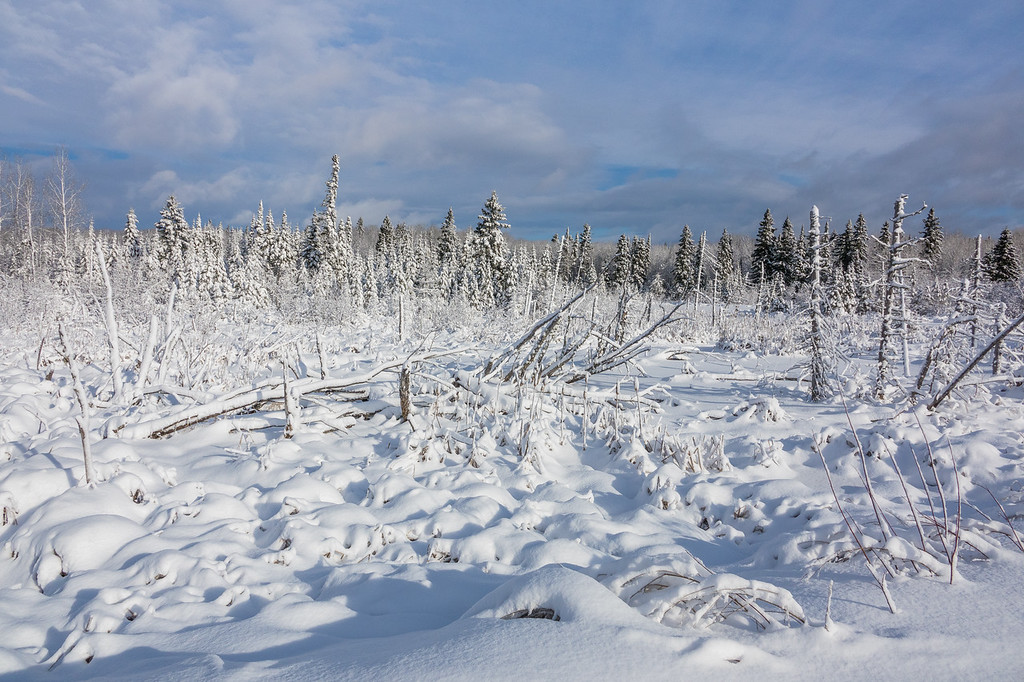 "SUNDAY, DECEMBER 11, 2016<br /> <br /> FOREST 03746<br /> <br /> ""Snowy December Swamp""<br /> <br /> We haven't seen the sun much in the past month but when we have it's been glorious!  Earlier this week we headed inland away from Lake Superior to see how much snow had fallen in the woods.  There was quite a bit as it turns out!  About a foot of snow blanketed the landscape, compared to barely an inch just a few miles away in our yard along the Lake Superior shoreline.  Our forecast is calling for more snow in the next 24 hours.  4 to 6 inches possible today with another 2 to 4 possible tonight.  Time will tell!  I'm anxious for it... I love winter :-)<br /> <br /> Camera: Sony DSC-RX10M3<br /> Focal length: 24mm<br /> Shutter speed: 1/2500<br /> Aperture: f/5.6<br /> ISO: 200"