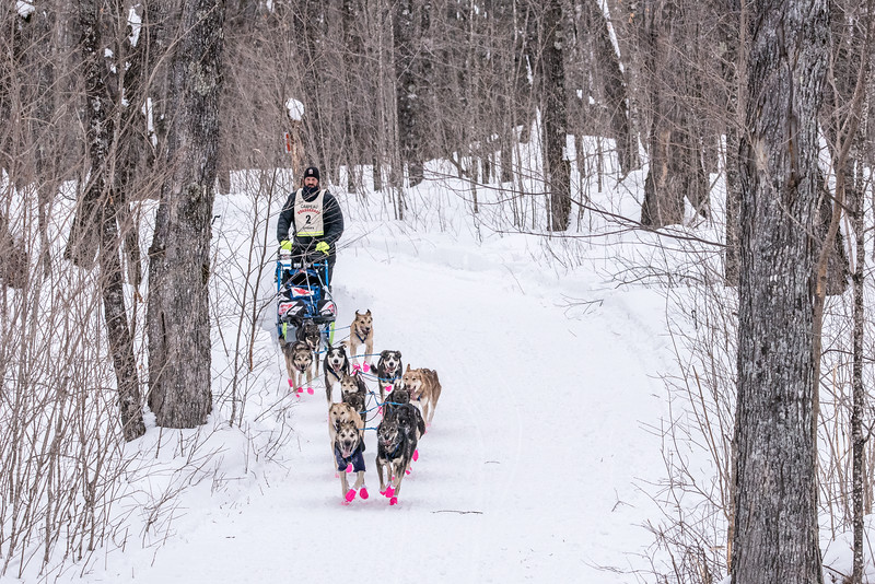 "SLED DOGS 6643<br /> <br /> ""Sled Dogs in the Sugar Bush""<br /> <br /> Jason Campeau of Rocky Mountain House, Alberta runs his dogs through the sugar maple forest of Grand Portage on approach to the half-way turnaround point of the 2016 John Beargrease Sled Dog Marathon.<br /> <br /> Camera: Nikon D750<br /> Lens: Tamron SP 150-600mm<br /> Focal length: 200mm<br /> Shutter speed: 1/640<br /> Aperture: f/11<br /> ISO: 3200"